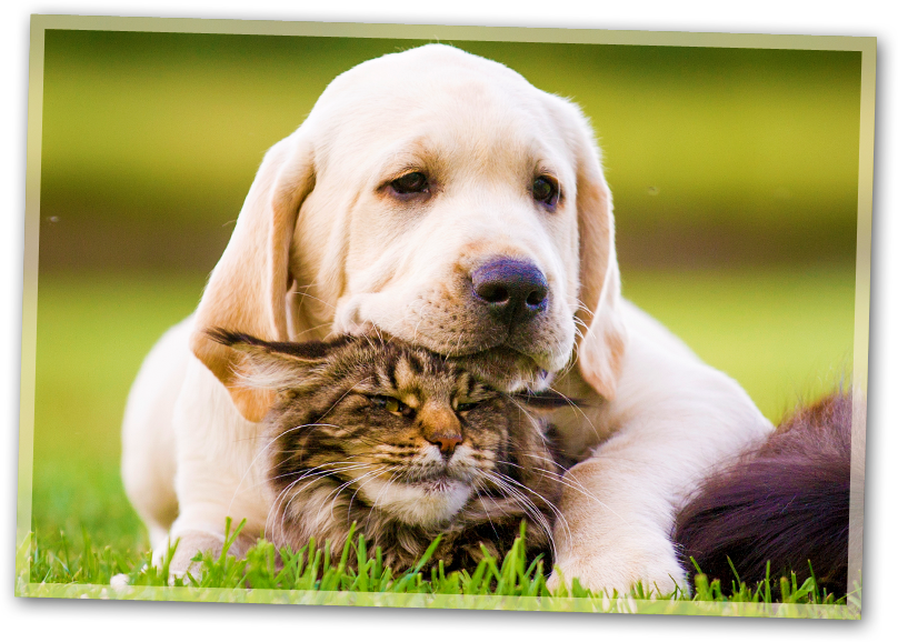 Health, Preventative and Diagnostic Services for your Pet.
