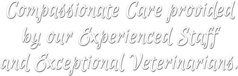 Compassionate Care provided by our Experienced Staff and Exceptional Veterinarians.